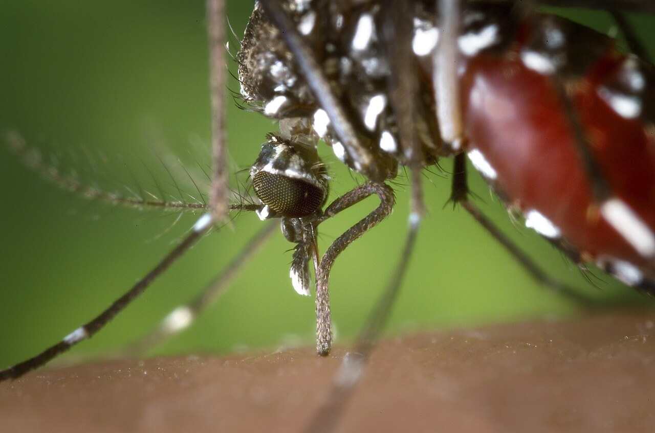 Aedes eggs can survive without water for 9 months
