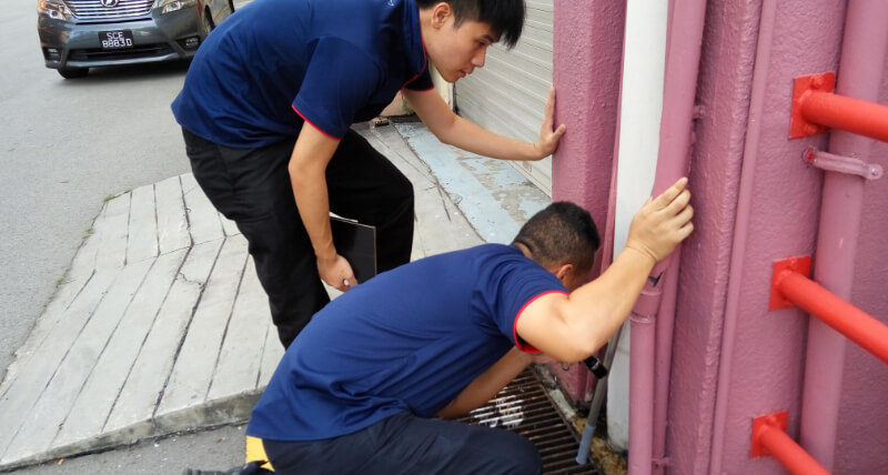 Pest Control Singapore - IKARI