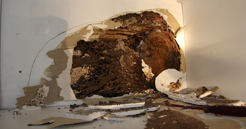 Termite Prevention - Pest Control