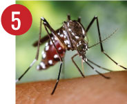 aedes-05-a