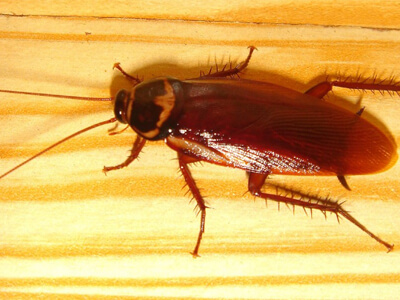 Contact us for termite control