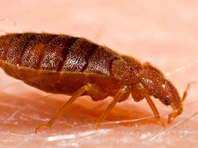 Bed bug bites treatment is available