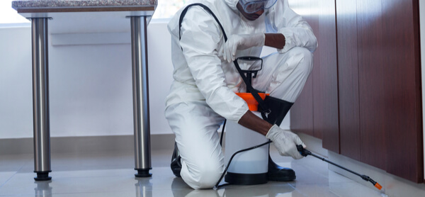 The Role Of Pest Control Services Ikari Solution To